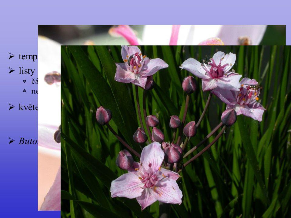  listy  čárkovité, ± trojhranné  nerozlišené na řapík a čepel Butomaceae  temperátní Eurasie  květenství okolík  Butomus umbellatus