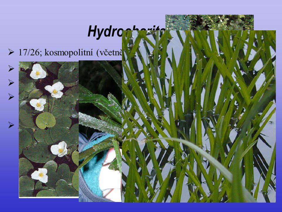 """ listy často rozlišené na řapík a čepel  listeny tvoří """"toulec"""" Hydrocharitaceae  květy často jednopohlavné; speciální opylování  Hydrocharis mors"""