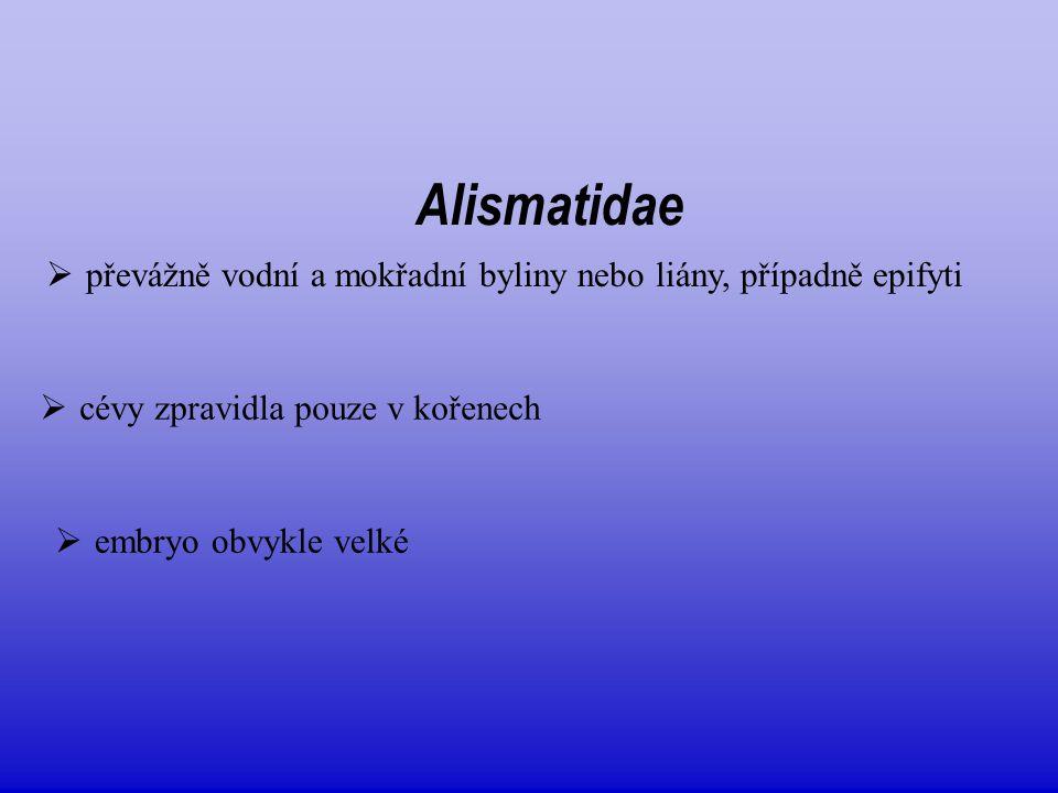 Alismataceae  12/80, téměř kosmopolitní  častá heterofylie, čepel vyvinutá  květenství hroznovité nebo latovité, často přeslenitě větvené  plody zpravidla nažky  Alisma plantago-aquatica  Sagittaria sagitifolia - jednopohlavné květy, pomnožené tyčinky  mléčnice  květy většinou oboupohlavné  G svrchní, apokarpní