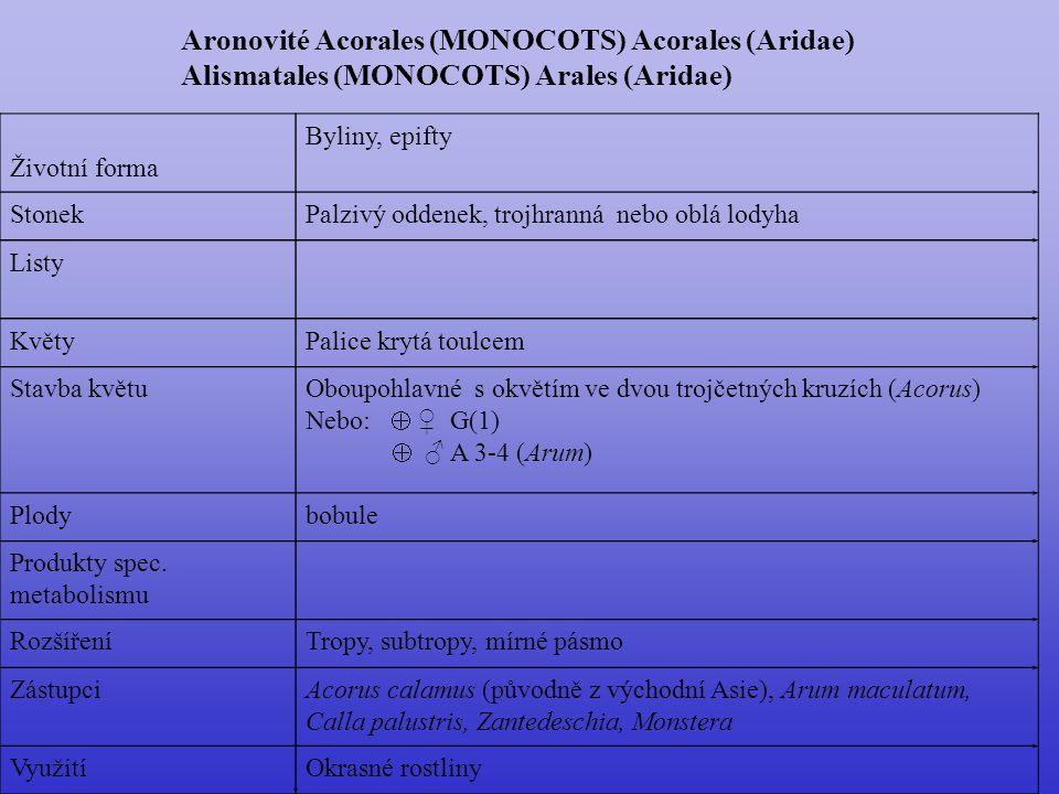 Araceae  110/3000; téměř kosmopolitní, centrum tropy Arum italicum Arum maculatum, Calla palustris Philodendron (500), Amorphophallus (zmijovec)(100), Anthurium (500), Dieffenbachia, Monstera, Zantedeschia aethiopica (svatební), Pistia