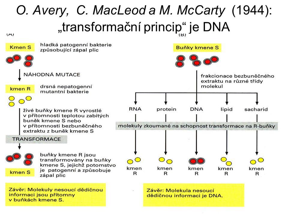 """O. Avery, C. MacLeod a M. McCarty (1944): """"transformační princip"""" je DNA virulentních"""