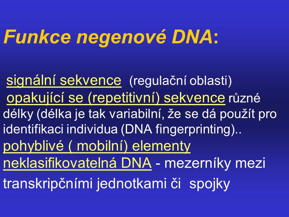 Funkce negenové DNA: signální sekvence (regulační oblasti) opakující se (repetitivní) sekvence různé délky (délka je tak variabilní, že se dá použít p