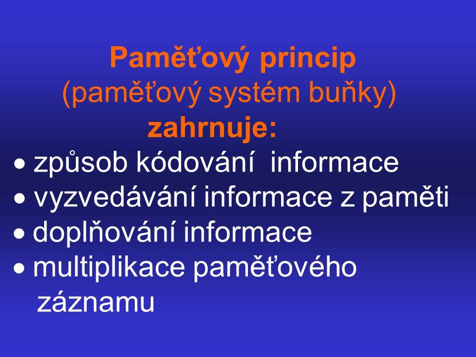 Paměťový princip (paměťový systém buňky) zahrnuje:  způsob kódování informace  vyzvedávání informace z paměti  doplňování informace  multiplik