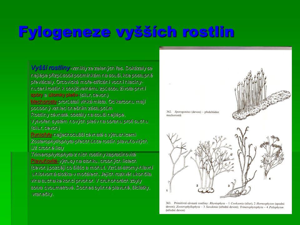 Fylogeneze vyšších rostlin Vyšší rostliny -vznikly ze zelených řas. Dokázaly se nejlépe přizpůsobit podmínkám na souši, kde postupně převládaly. Ordov