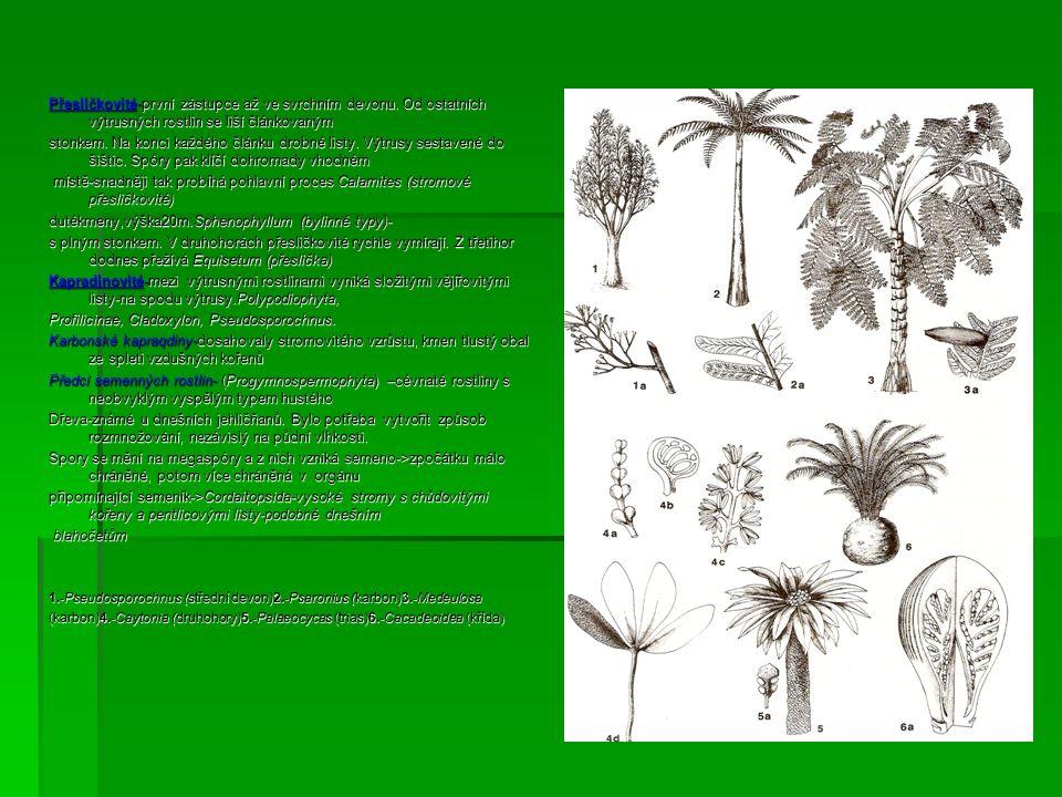 Přesličkovité-první zástupce až ve svrchním devonu. Od ostatních výtrusných rostlin se liší článkovaným stonkem. Na konci každého článku drobné listy.