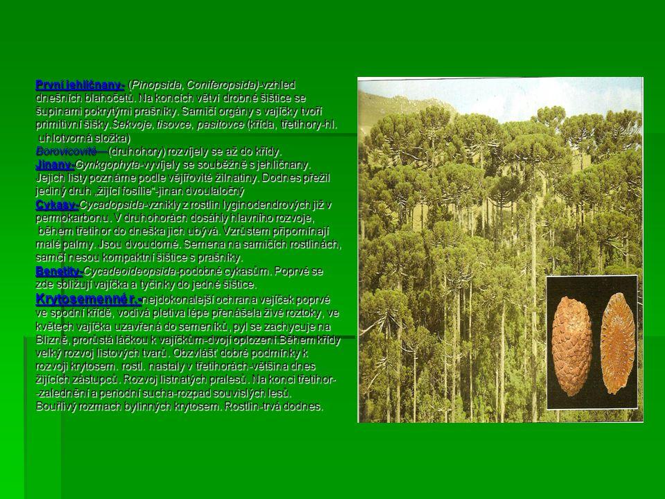 První jehličnany- (Pinopsida, Coniferopsida)-vzhled dnešních blahočetů. Na koncích větví drobné šištice se šupinami pokrytými prašníky. Samičí orgány