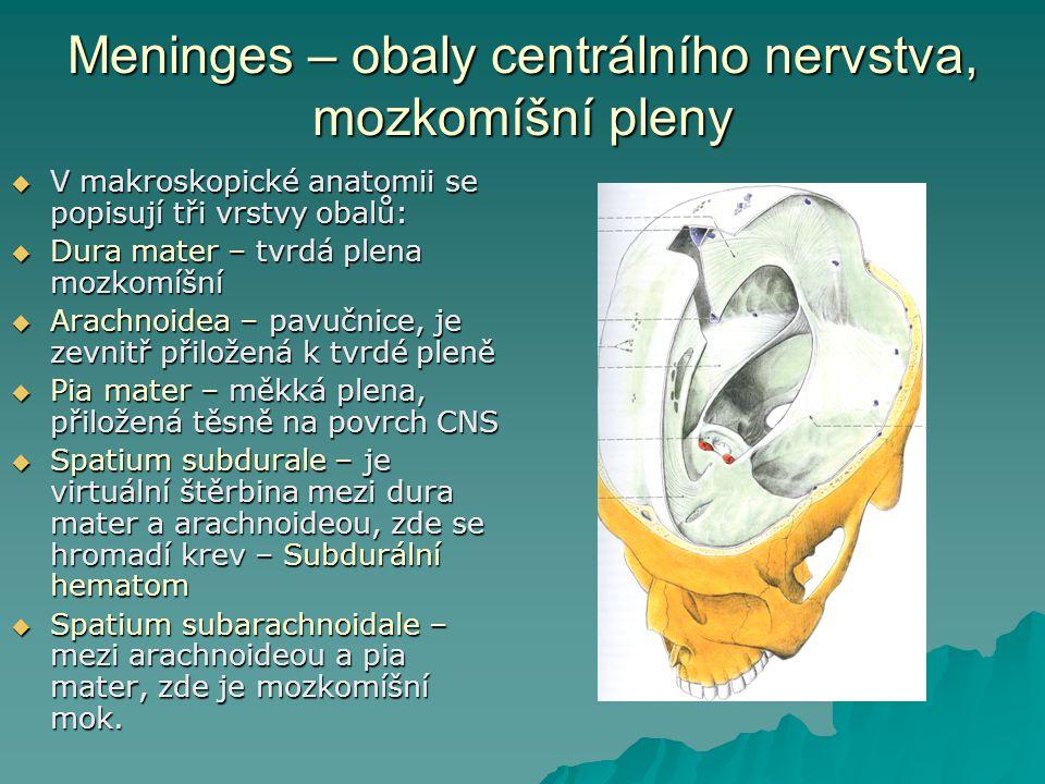 Meninges – obaly centrálního nervstva, mozkomíšní pleny  V makroskopické anatomii se popisují tři vrstvy obalů:  Dura mater – tvrdá plena mozkomíšní