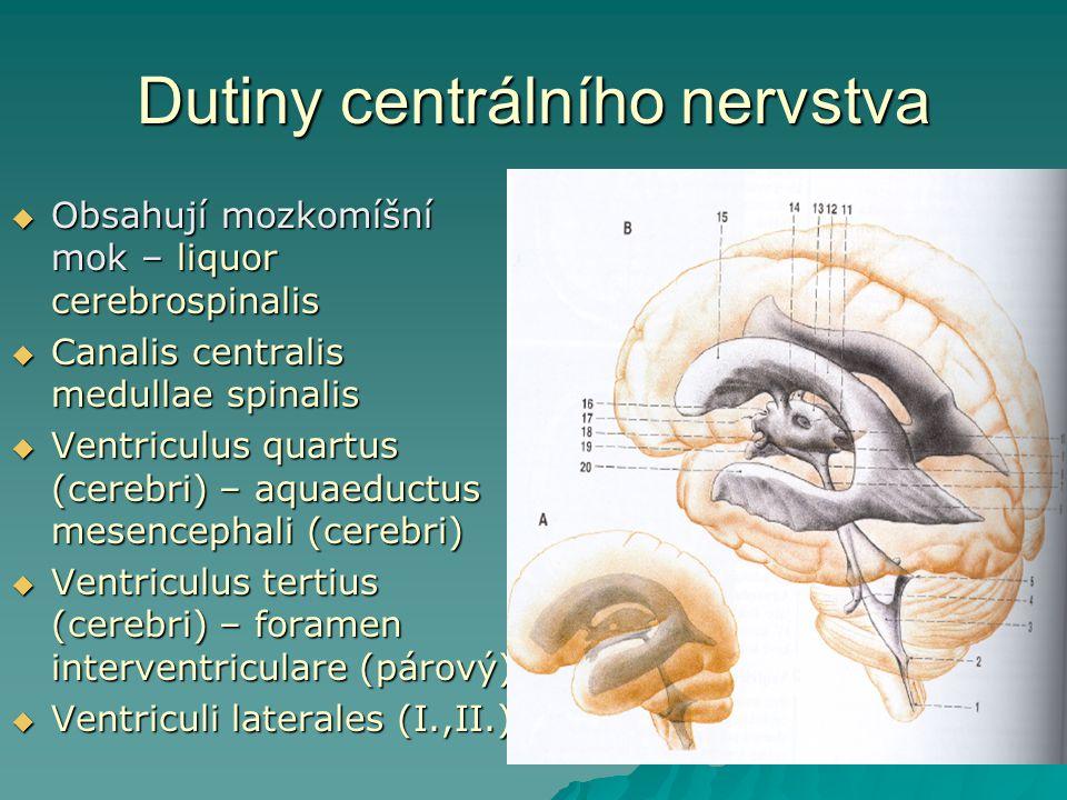 Dutiny centrálního nervstva  Obsahují mozkomíšní mok – liquor cerebrospinalis  Canalis centralis medullae spinalis  Ventriculus quartus (cerebri) –