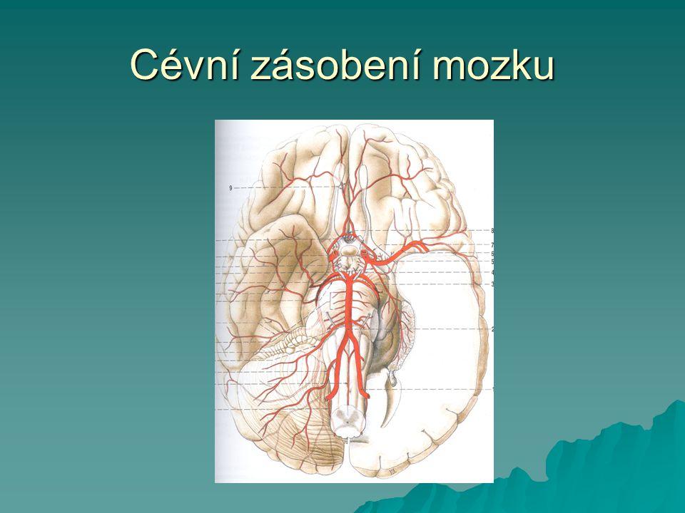 Cévní zásobení mozku