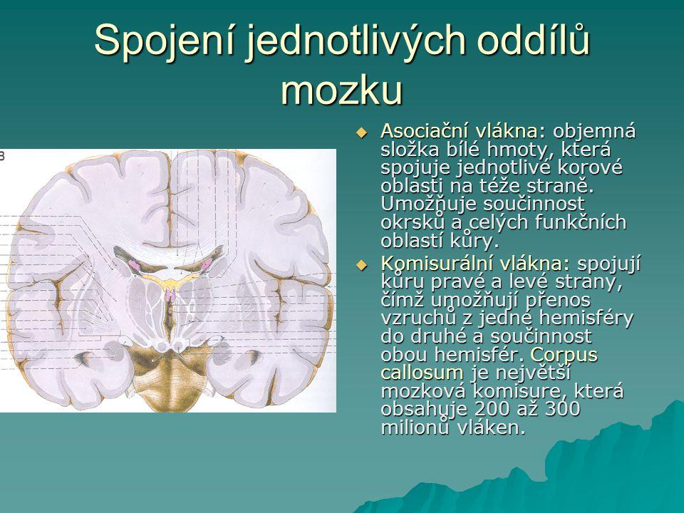 Spojení jednotlivých oddílů mozku  Asociační vlákna: objemná složka bílé hmoty, která spojuje jednotlivé korové oblasti na téže straně. Umožňuje souč