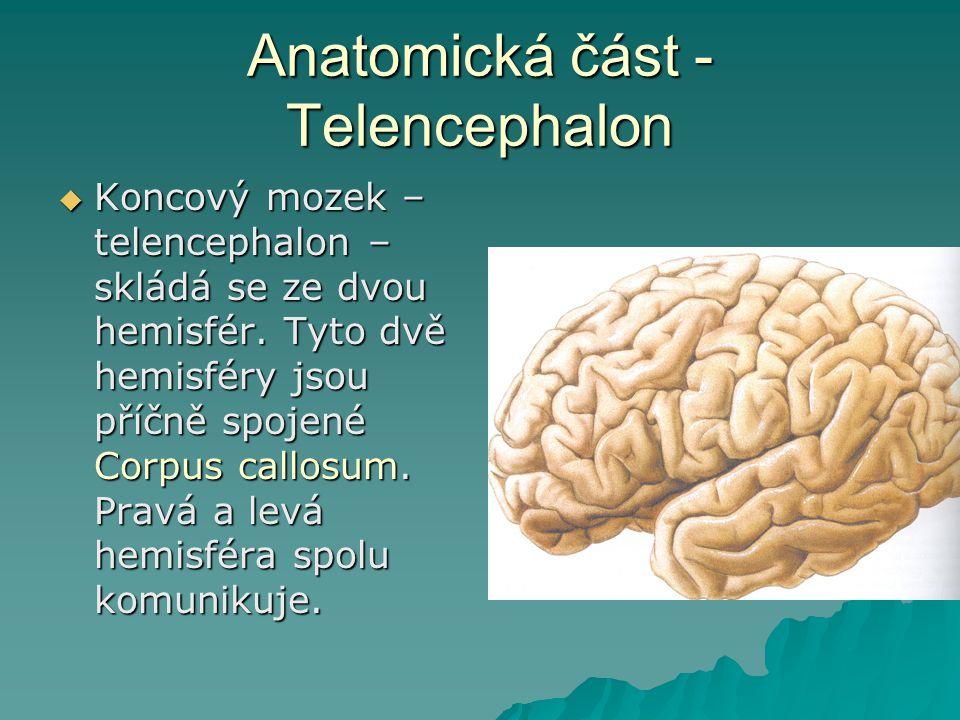 Anatomická část - Telencephalon  Koncový mozek – telencephalon – skládá se ze dvou hemisfér. Tyto dvě hemisféry jsou příčně spojené Corpus callosum.