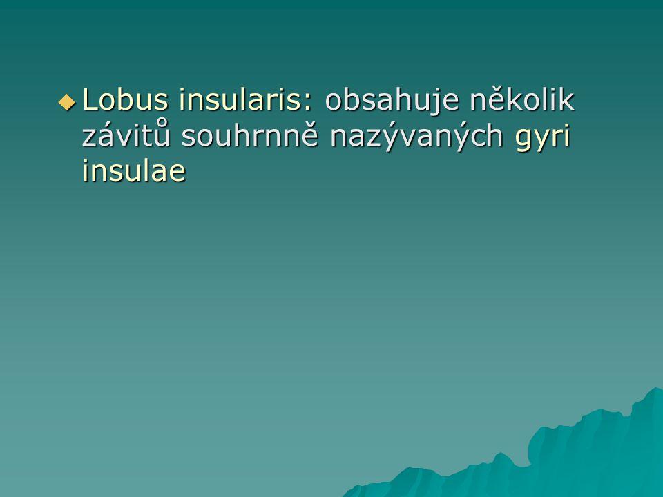 Gyri et sulci na vnitřní ploše hemisféry  Závity přilehlé ke corpus callosum: gyrus paraterminalis, area subcallosa, gyrus cinguli, gyrus hippcampi, uncus, gyrus dentatus, hippocampus, tyto útvary (kromě gyrus paraterminalis) jsou součástí Limbického systému: tedy 1) Korová část limbického systému.