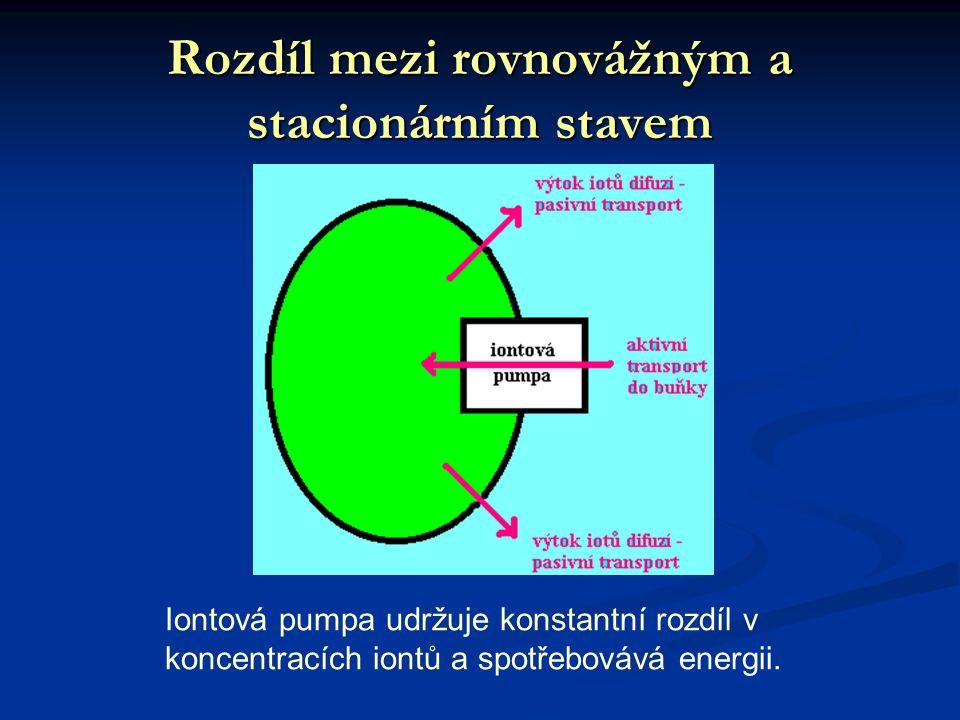Rozdíl mezi rovnovážným a stacionárním stavem Iontová pumpa udržuje konstantní rozdíl v koncentracích iontů a spotřebovává energii.
