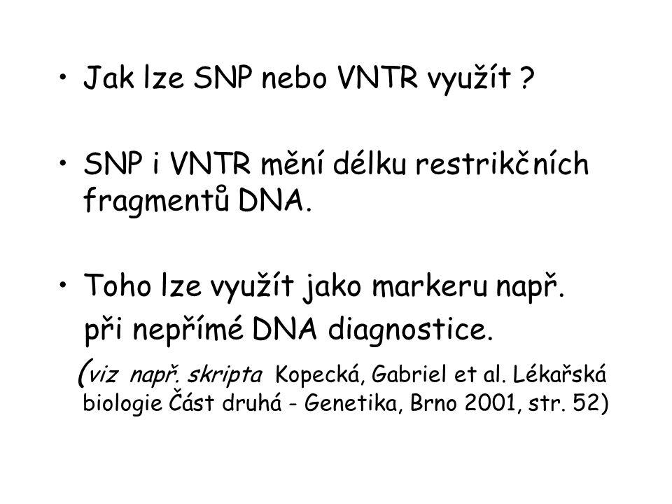 Jak lze SNP nebo VNTR využít .SNP i VNTR mění délku restrikčních fragmentů DNA.