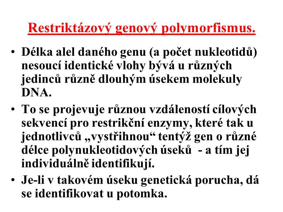 Restriktázový genový polymorfismus.