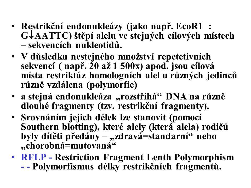 Restrikční endonukleázy (jako např.