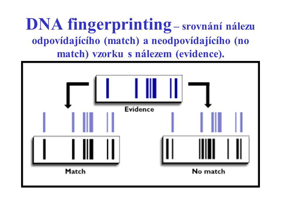 DNA fingerprinting – srovnání nálezu odpovídajícího (match) a neodpovídajícího (no match) vzorku s nálezem (evidence).