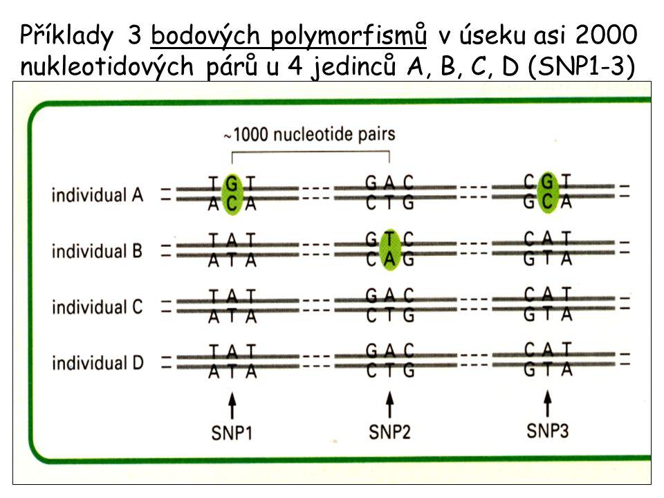 Využívá polymorfismů DNA jako markerů pro sledování přenosu vlohy v rodině.