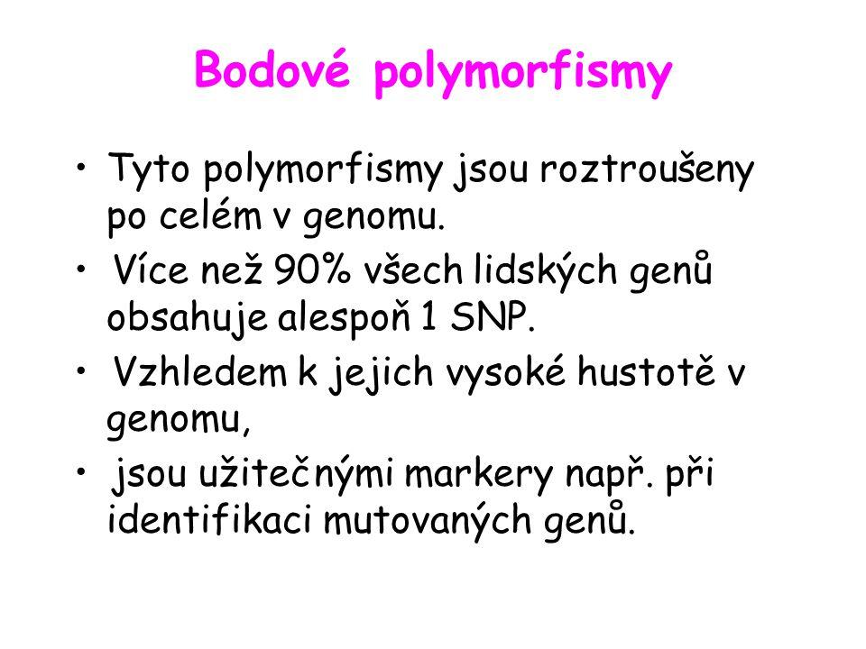 Bodové polymorfismy Tyto polymorfismy jsou roztroušeny po celém v genomu.