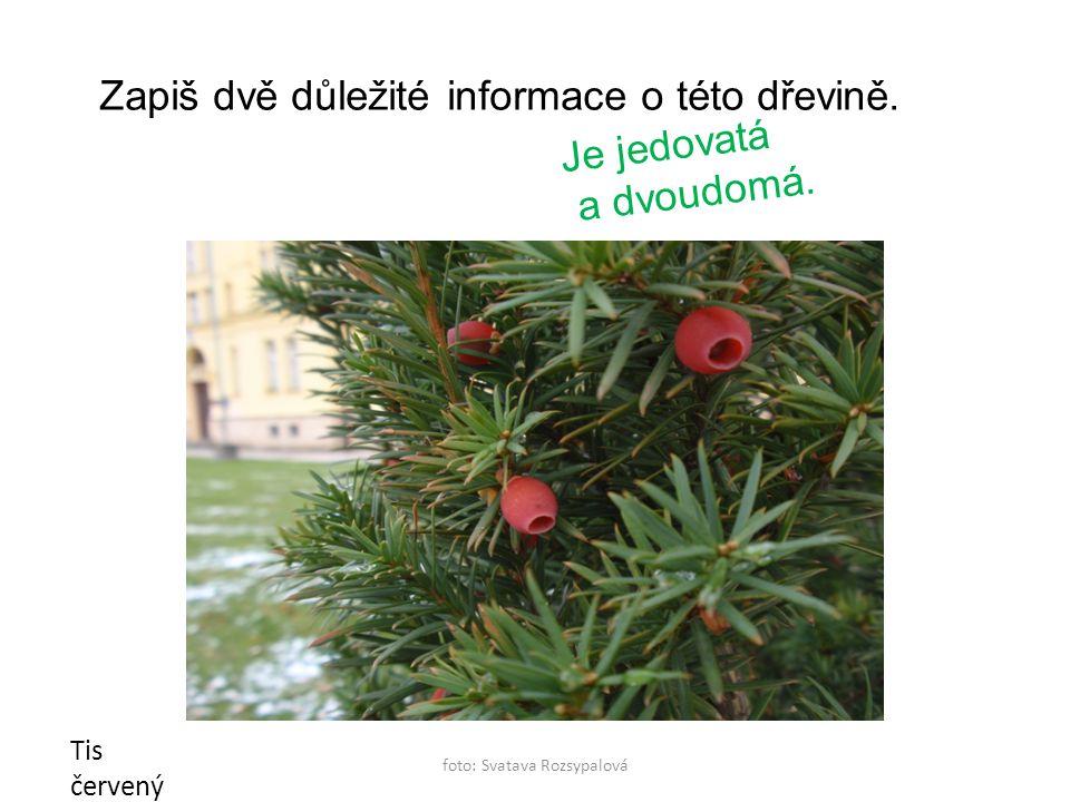 foto: Svatava Rozsypalová Tis červený Zapiš dvě důležité informace o této dřevině.