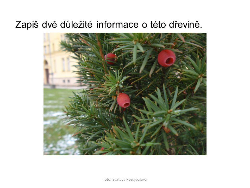 foto: Svatava Rozsypalová Zapiš dvě důležité informace o této dřevině.