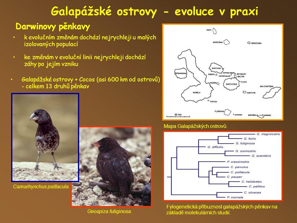Darwinovy pěnkavy Galapážské ostrovy - evoluce v praxi Mapa Galapážských ostrovů.