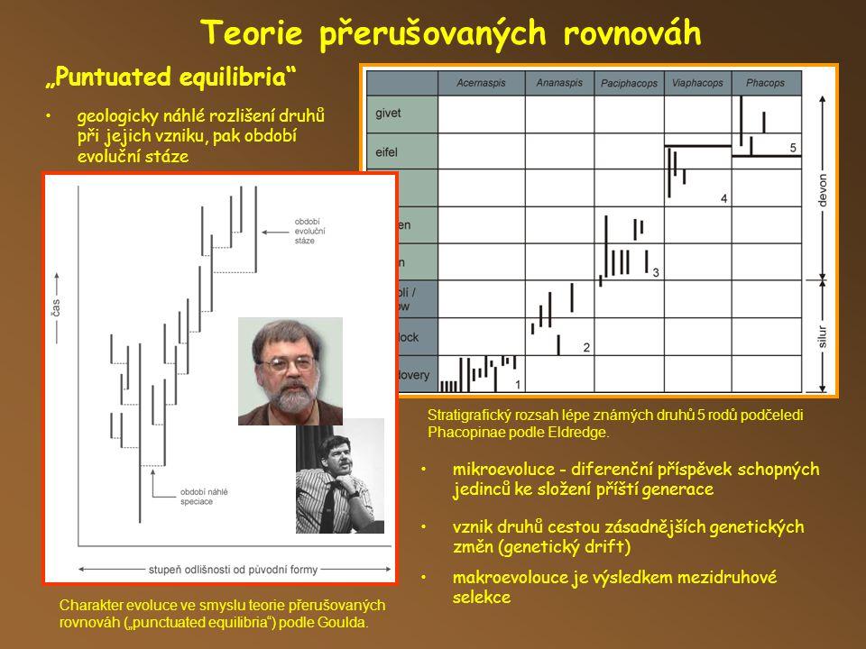 """Teorie přerušovaných rovnováh """"Puntuated equilibria Stratigrafický rozsah lépe známých druhů 5 rodů podčeledi Phacopinae podle Eldredge."""
