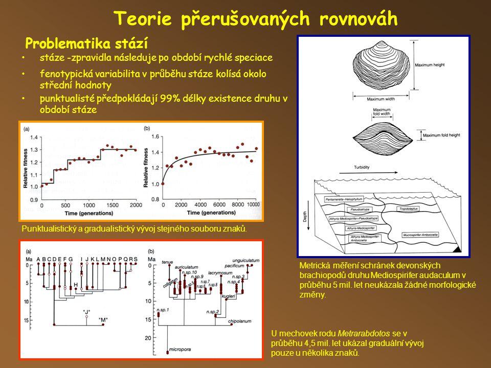 Teorie přerušovaných rovnováh Problematika stází fenotypická variabilita v průběhu stáze kolísá okolo střední hodnoty stáze -zpravidla následuje po období rychlé speciace punktualisté předpokládají 99% délky existence druhu v období stáze Metrická měření schránek devonských brachiopodů druhu Mediospirifer audaculum v průběhu 5 mil.
