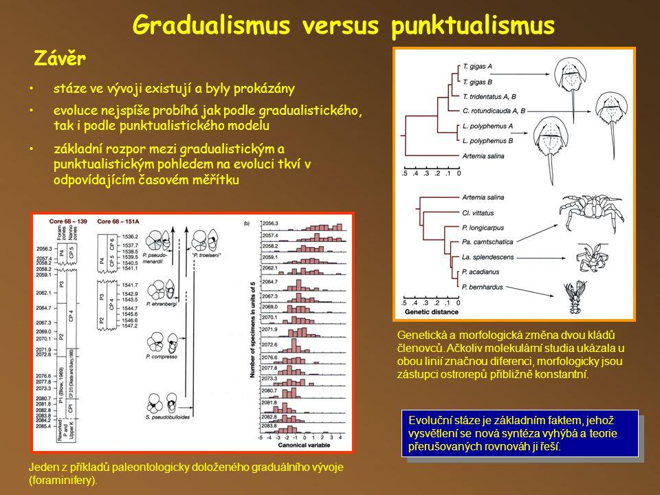 Gradualismus versus punktualismus Evoluční stáze je základním faktem, jehož vysvětlení se nová syntéza vyhýbá a teorie přerušovaných rovnováh ji řeší.