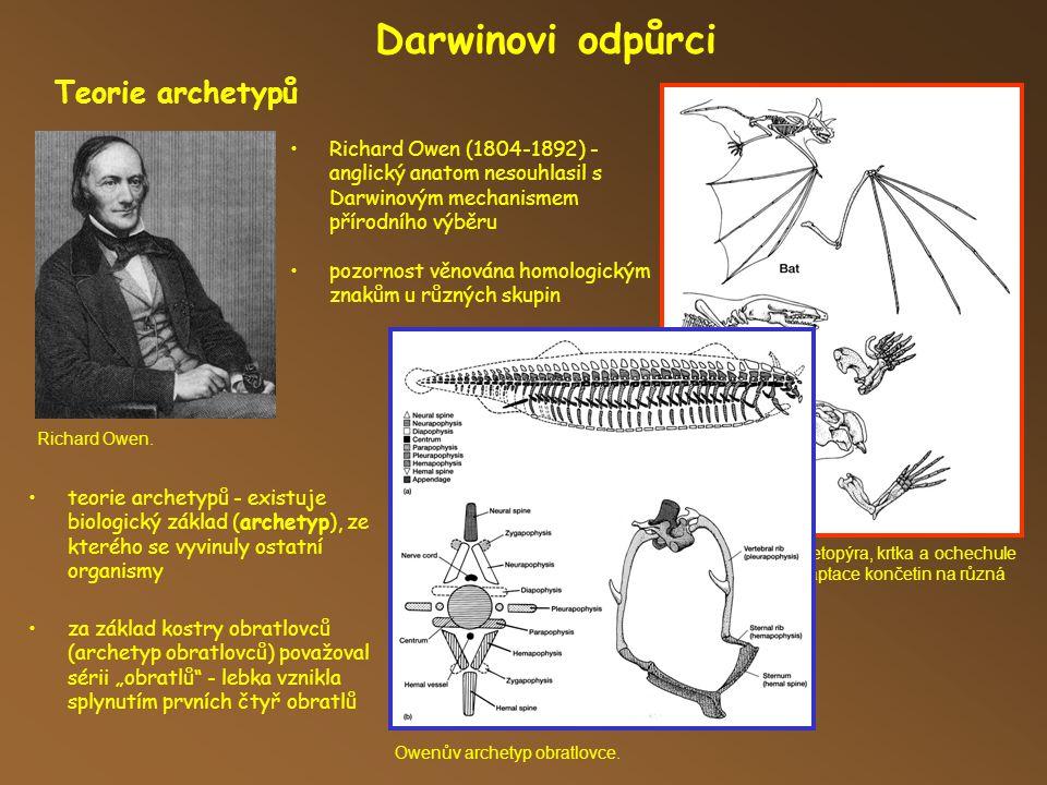 Přední končetiny netopýra, krtka a ochechule - Owen si všiml adaptace končetin na různá prostředí.