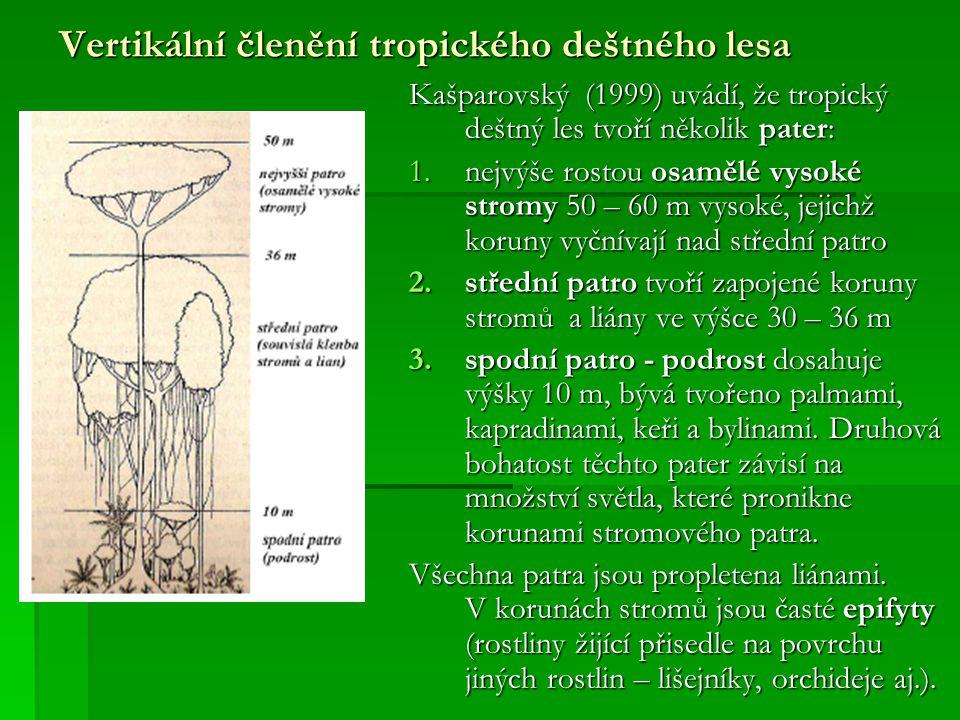 Vertikální členění tropického deštného lesa Kašparovský (1999) uvádí, že tropický deštný les tvoří několik pater: 1.nejvýše rostou osamělé vysoké stro
