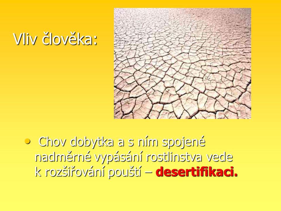 Vliv člověka: Chov dobytka a s ním spojené nadměrné vypásání rostlinstva vede k rozšiřování pouští – desertifikaci. Chov dobytka a s ním spojené nadmě