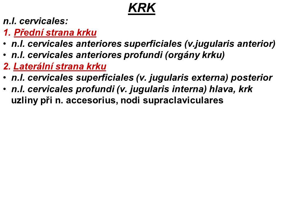 KRK n.l. cervicales: 1. Přední strana krku n.l. cervicales anteriores superficiales (v.jugularis anterior) n.l. cervicales anteriores profundi (orgány