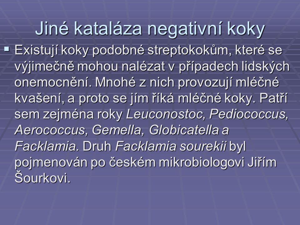 Jiné kataláza negativní koky  Existují koky podobné streptokokům, které se výjimečně mohou nalézat v případech lidských onemocnění. Mnohé z nich prov