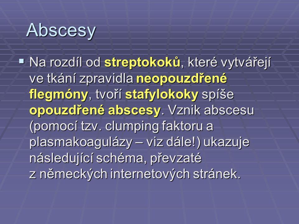 Abscesy  Na rozdíl od streptokoků, které vytvářejí ve tkání zpravidla neopouzdřené flegmóny, tvoří stafylokoky spíše opouzdřené abscesy. Vznik absces
