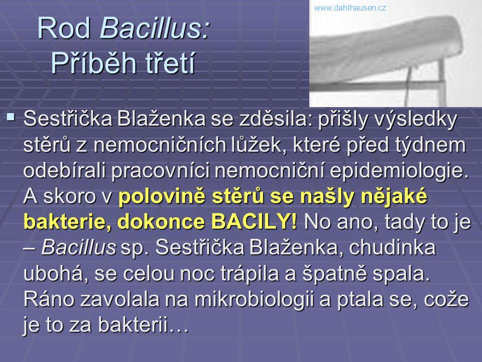 Rod Bacillus: Příběh třetí  Sestřička Blaženka se zděsila: přišly výsledky stěrů z nemocničních lůžek, které před týdnem odebírali pracovníci nemocni