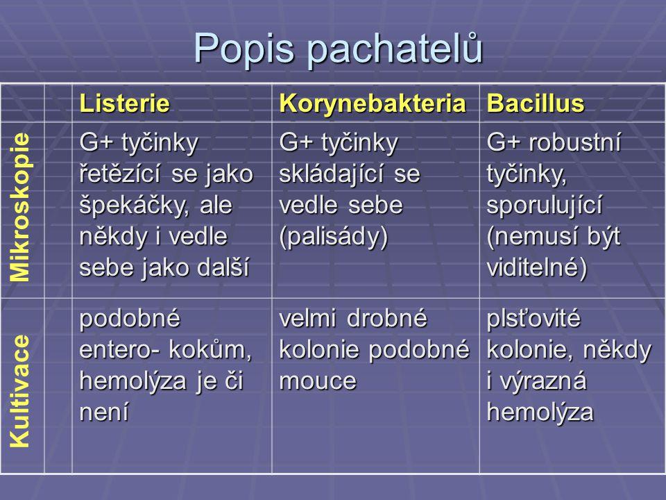 Popis pachatelů ListerieKorynebakteriaBacillus G+ tyčinky řetězící se jako špekáčky, ale někdy i vedle sebe jako další G+ tyčinky skládající se vedle