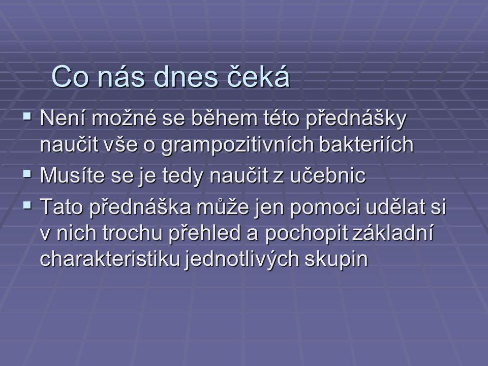 2. Streptokoky (a jiné podobné) Plyšový streptokok www.giantmicrobes.com, www.plysovimikrobi.cz