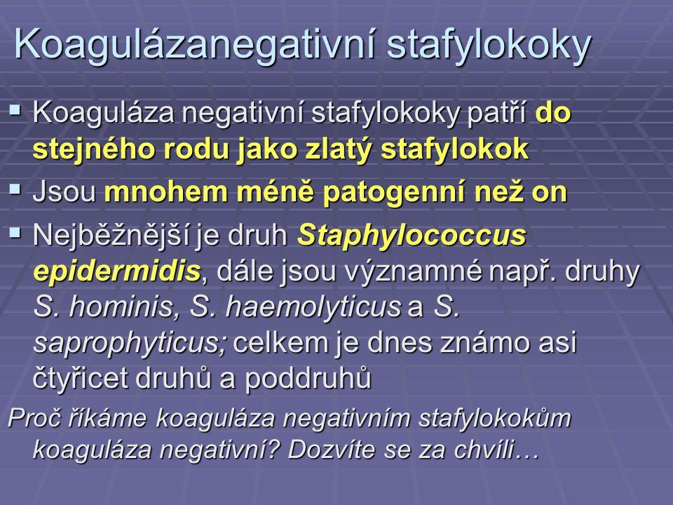Koagulázanegativní stafylokoky  Koaguláza negativní stafylokoky patří do stejného rodu jako zlatý stafylokok  Jsou mnohem méně patogenní než on  Ne