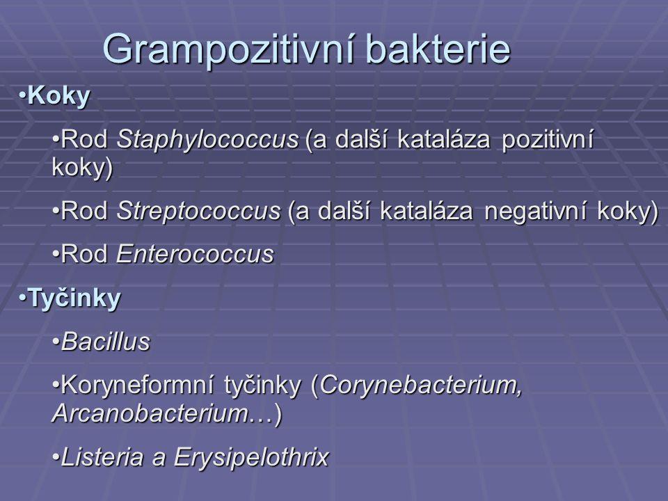 Grampozitivní bakterie KokyKoky Rod Staphylococcus (a další kataláza pozitivní koky)Rod Staphylococcus (a další kataláza pozitivní koky) Rod Streptoco