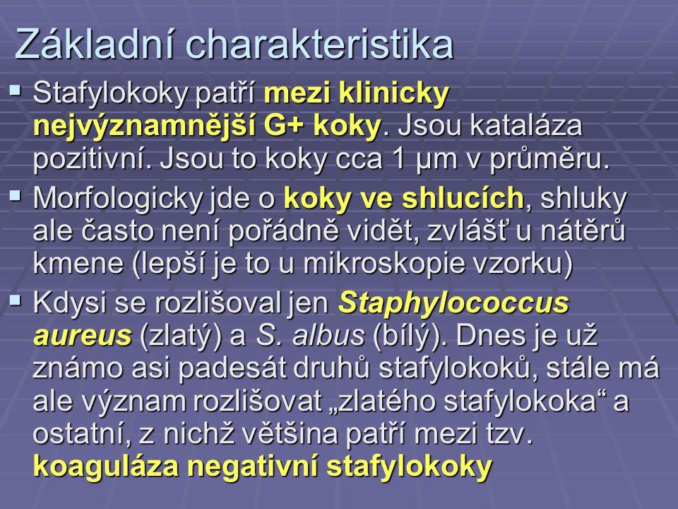 Základní charakteristika  Stafylokoky patří mezi klinicky nejvýznamnější G+ koky. Jsou kataláza pozitivní. Jsou to koky cca 1 µm v průměru.  Morfolo
