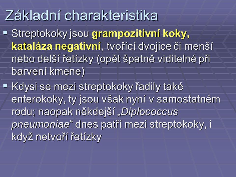 Základní charakteristika  Streptokoky jsou grampozitivní koky, kataláza negativní, tvořící dvojice či menší nebo delší řetízky (opět špatně viditelné