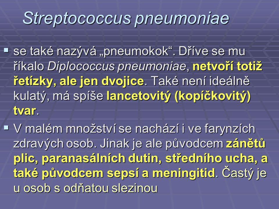 """Streptococcus pneumoniae  se také nazývá """"pneumokok"""". Dříve se mu říkalo Diplococcus pneumoniae, netvoří totiž řetízky, ale jen dvojice. Také není id"""