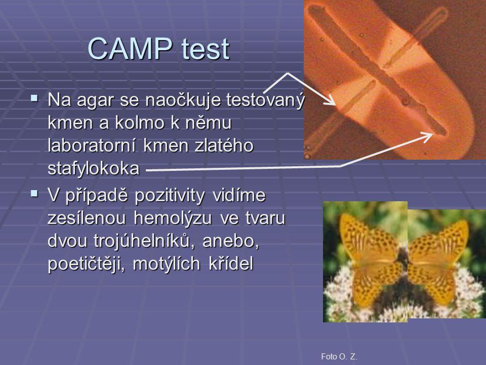 CAMP test  Na agar se naočkuje testovaný kmen a kolmo k němu laboratorní kmen zlatého stafylokoka  V případě pozitivity vidíme zesílenou hemolýzu ve