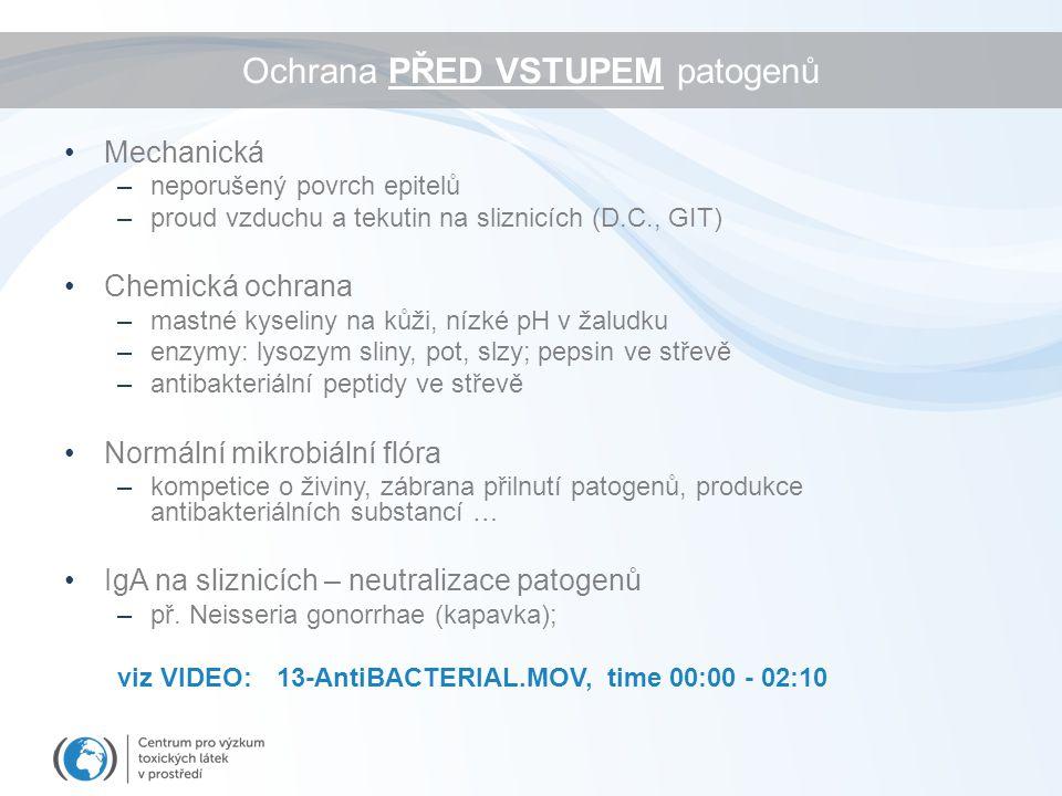 Ochrana PŘED VSTUPEM patogenů Mechanická –neporušený povrch epitelů –proud vzduchu a tekutin na sliznicích (D.C., GIT) Chemická ochrana –mastné kyseliny na kůži, nízké pH v žaludku –enzymy: lysozym sliny, pot, slzy; pepsin ve střevě –antibakteriální peptidy ve střevě Normální mikrobiální flóra –kompetice o živiny, zábrana přilnutí patogenů, produkce antibakteriálních substancí … IgA na sliznicích – neutralizace patogenů –př.