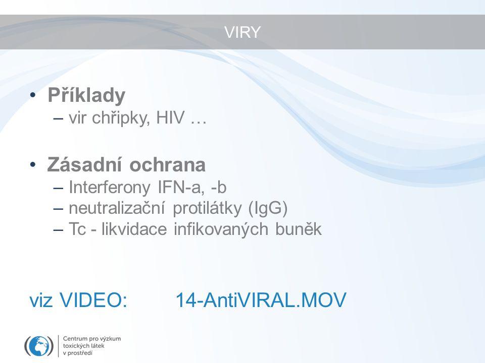 VIRY Příklady –vir chřipky, HIV … Zásadní ochrana –Interferony IFN-a, -b –neutralizační protilátky (IgG) –Tc - likvidace infikovaných buněk viz VIDEO:14-AntiVIRAL.MOV