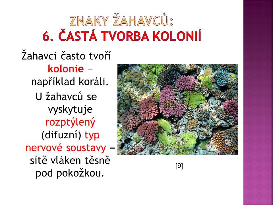 Žahavci často tvoří kolonie − například koráli. U žahavců se vyskytuje rozptýlený (difuzní) typ nervové soustavy = sítě vláken těsně pod pokožkou. [9]