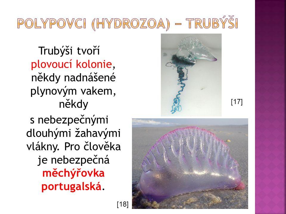 Trubýši tvoří plovoucí kolonie, někdy nadnášené plynovým vakem, někdy s nebezpečnými dlouhými žahavými vlákny. Pro člověka je nebezpečná měchýřovka po