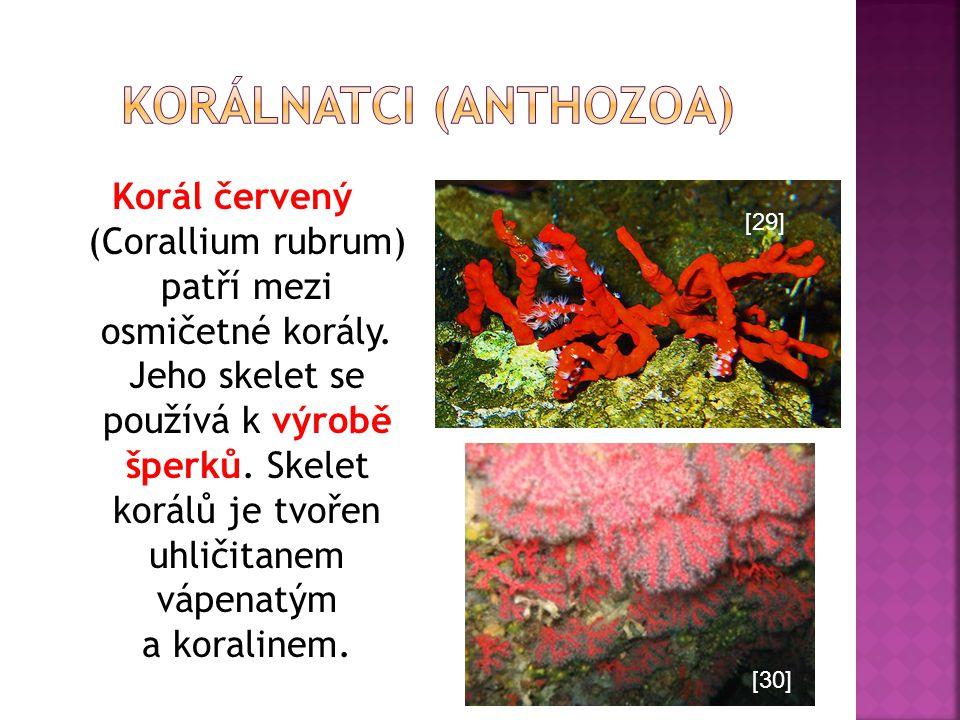 Korál červený (Corallium rubrum) patří mezi osmičetné korály. Jeho skelet se používá k výrobě šperků. Skelet korálů je tvořen uhličitanem vápenatým a