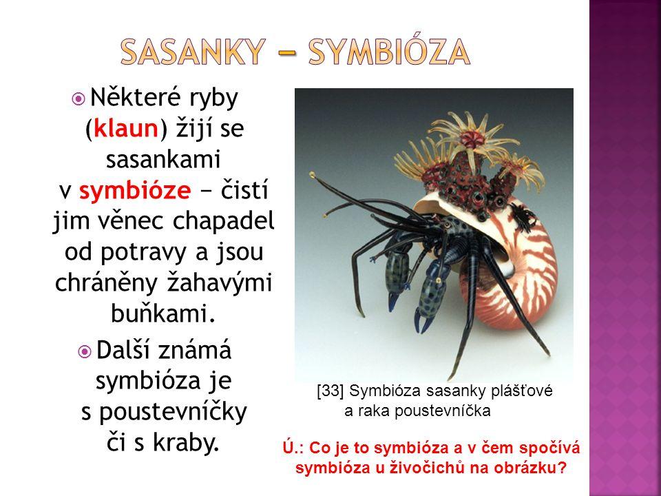  Některé ryby (klaun) žijí se sasankami v symbióze − čistí jim věnec chapadel od potravy a jsou chráněny žahavými buňkami.  Další známá symbióza je
